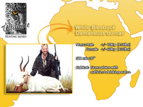 White-Blesbuck.jpg