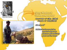 Grey Rhebuck.jpg