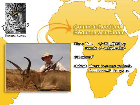 Common-Reedbuck.jpg