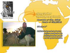 Grey Duiker.jpg