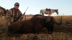 Black Wildebeest1 - Copy.jpg