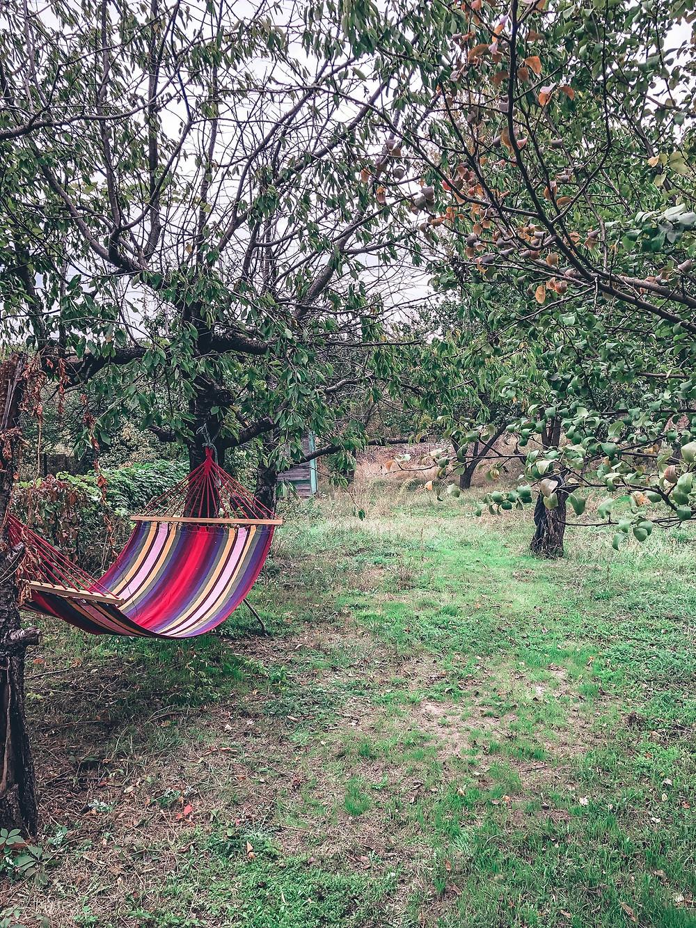 The dacha's backyard
