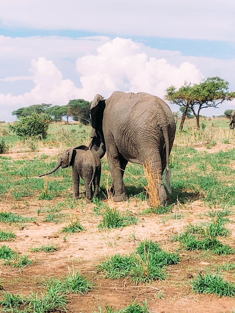 Mama and baby elephant out for a stroll along the Tarangire River