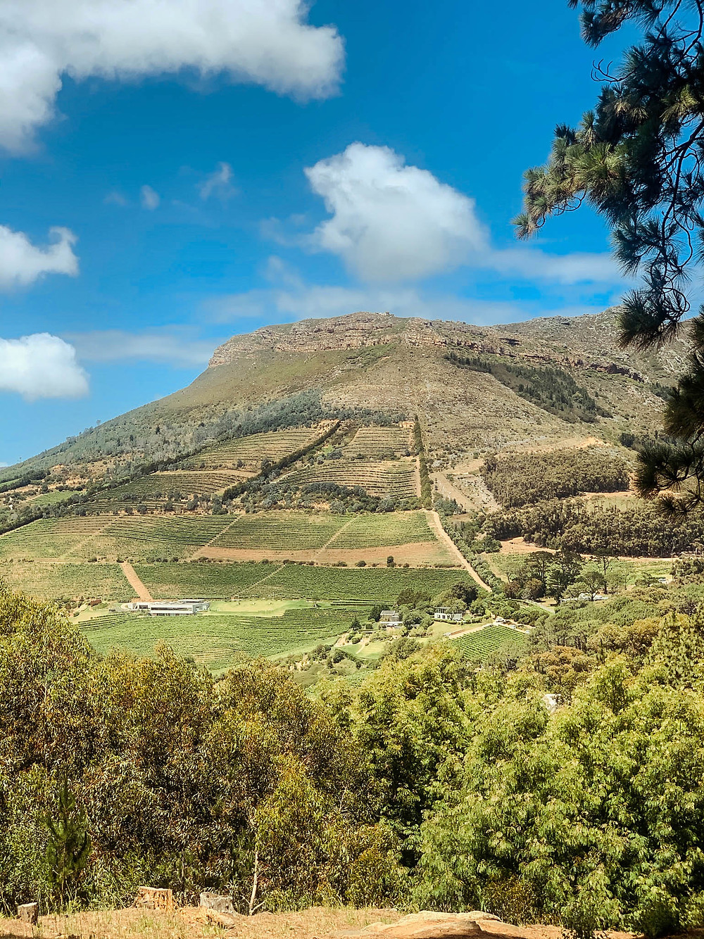 Looking out from Constantia Nek into the valley's wine farms