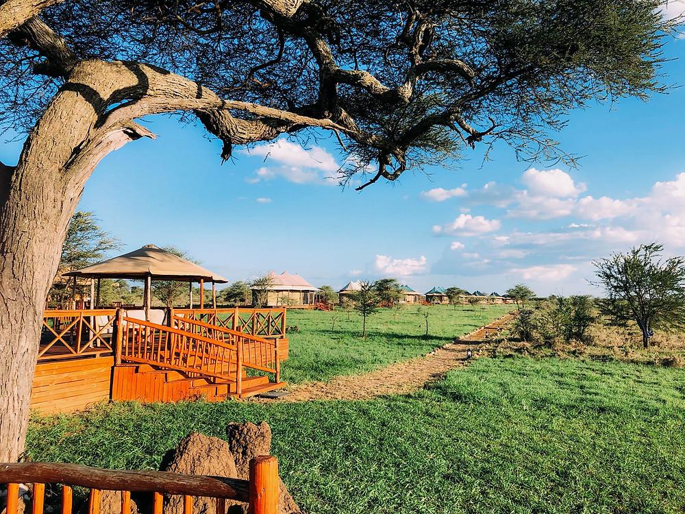 """Glamping"" in Serengeti"