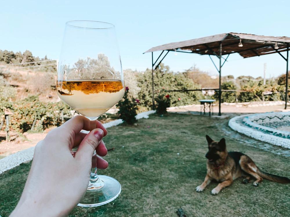 Part fetch, part wine!