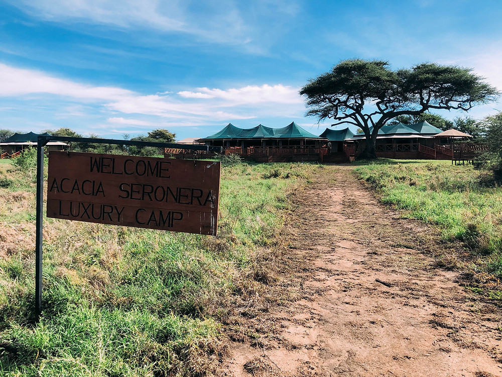 """Strolling up the path leading to Acacia Seronera Luxury Camp - """"camp"""" in name only!"""
