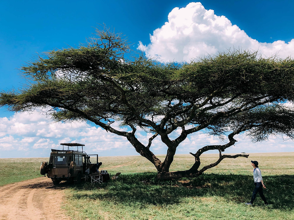 A picnic lunch on the Serengeti plains