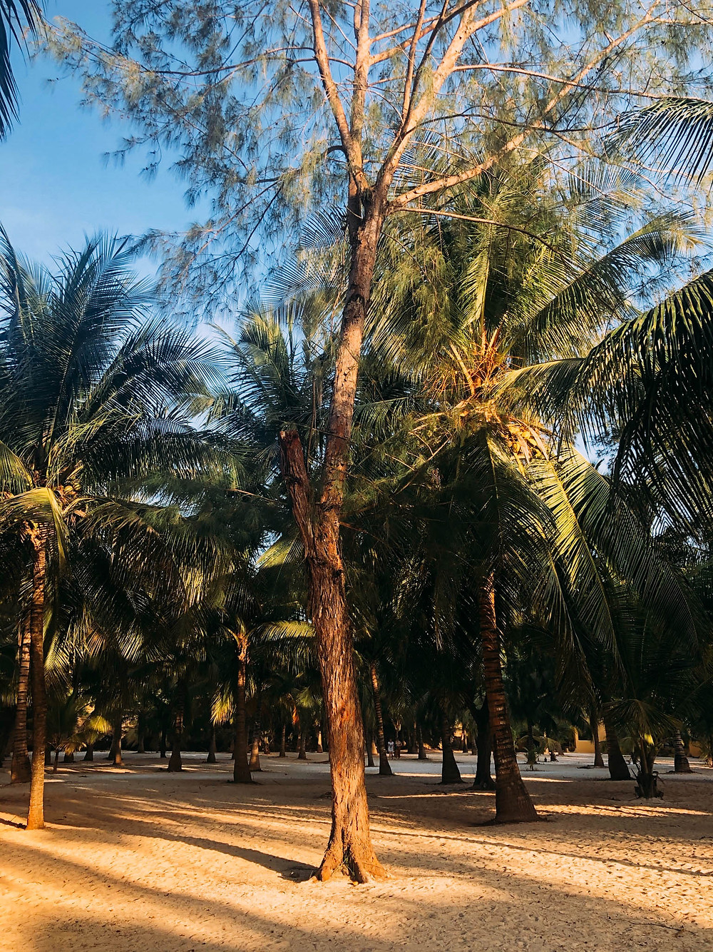 Where Kendwa's beaches and jungles collide
