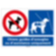 l0952_chiens_guides_uniquement-z.jpg