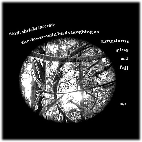 Shrill Shrieks wix.jpg