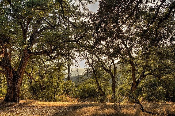 southern california meditation retreat women nude naked nature san diego california Women's Retreat
