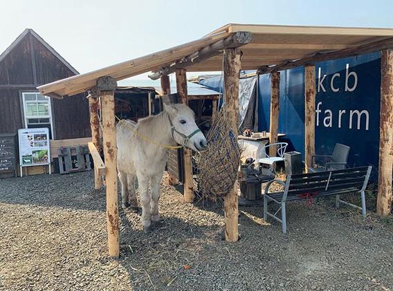 今朝は、牧草ヤードに下屋をつけました。_脚を洗ったり鞍をのせたり_色々な使い方が
