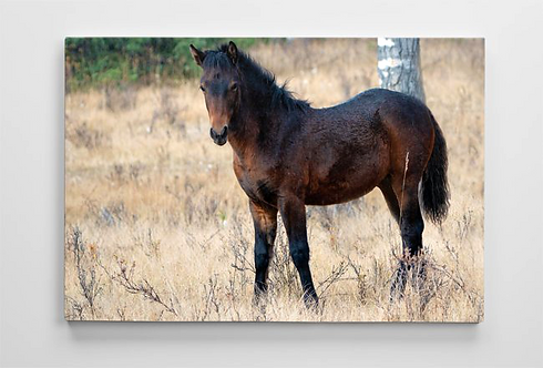 Wild Thing - Frisky Foal