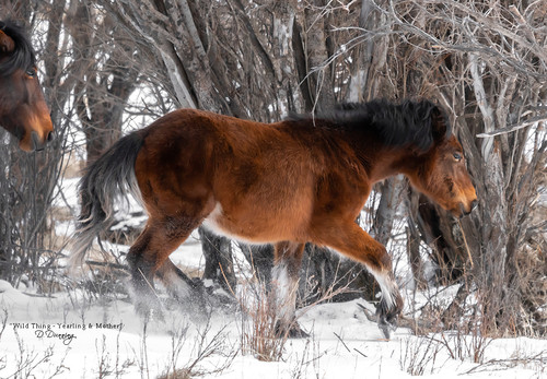 Wild Thing - Yearling & Mother