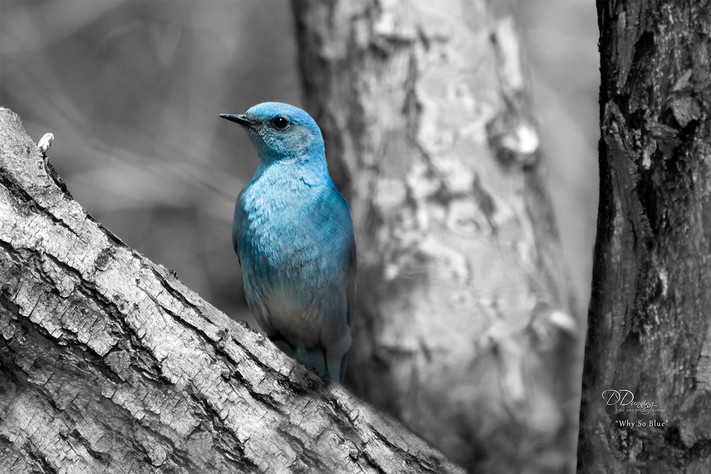 Why So Blue