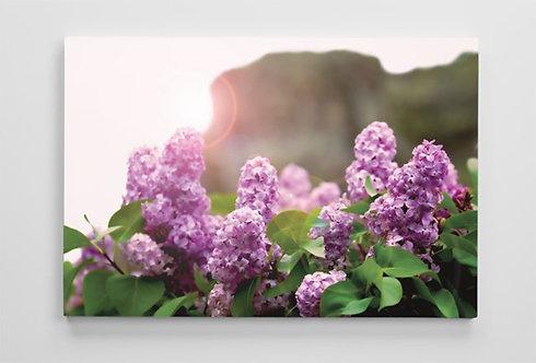 Lilac Ridge
