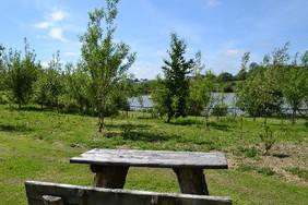 picnic area.jpg