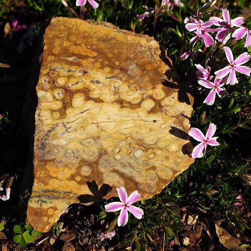 Ocean Jasper Slab | Silicate | Spotted Jasper | Mineral Healing