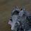 Thumbnail: Phantom Quartz | Chlorite Quartz | Quartz | Crystal | Crystal Healing | Chakra