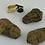 Thumbnail: Trilobite | Fossil | Raw Fossil | Grey | Brown | Index Fossil | Mineral | Solar