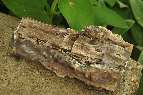 Petrified Wood from Wyoming