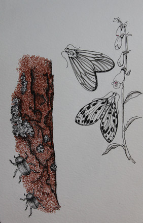 insectsonbark.jpg