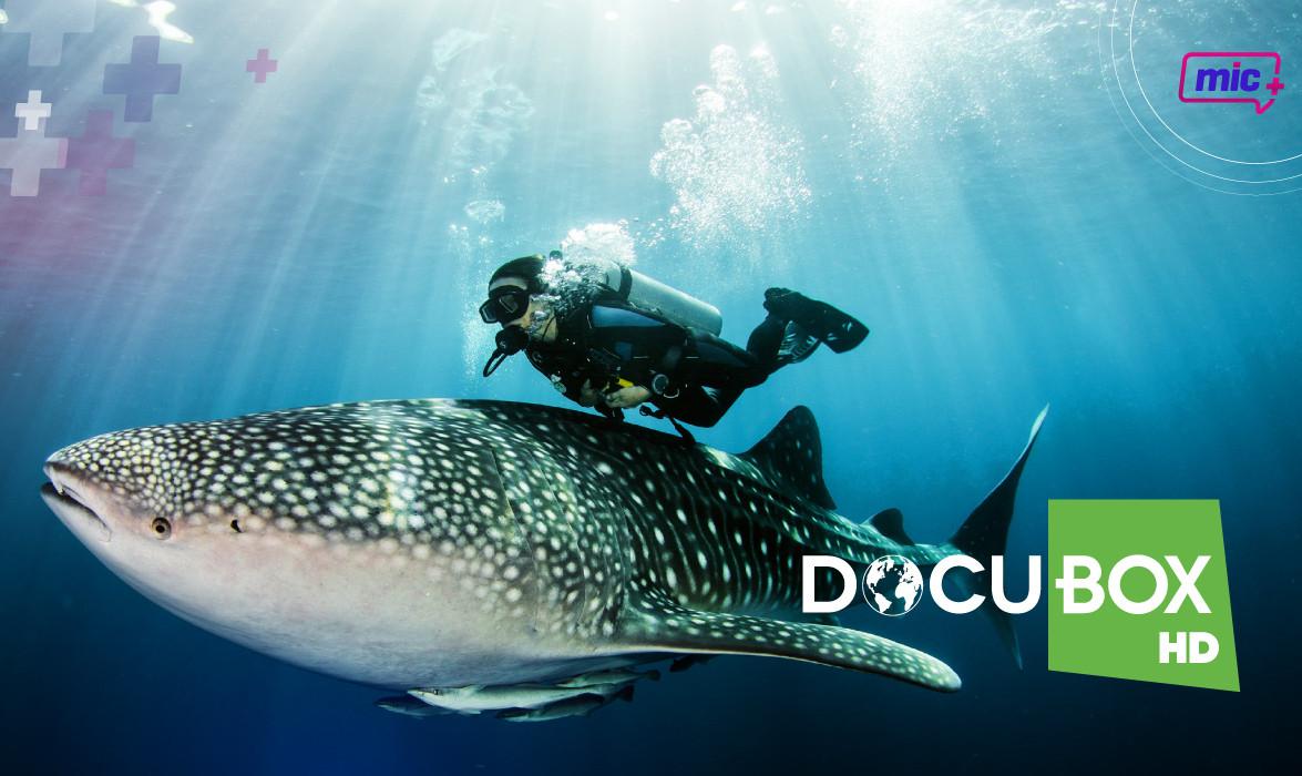 Docu BOX HD pag internas-01.jpg