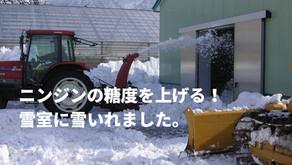 ニンジンの糖度を上げる!雪室に雪いれました。