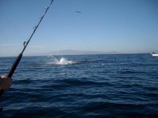 fishing33.jpg