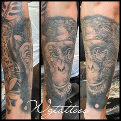 chimpanzee tattoo