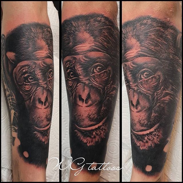 #chimp #chimpanzee #animaltattoo #wgtatt