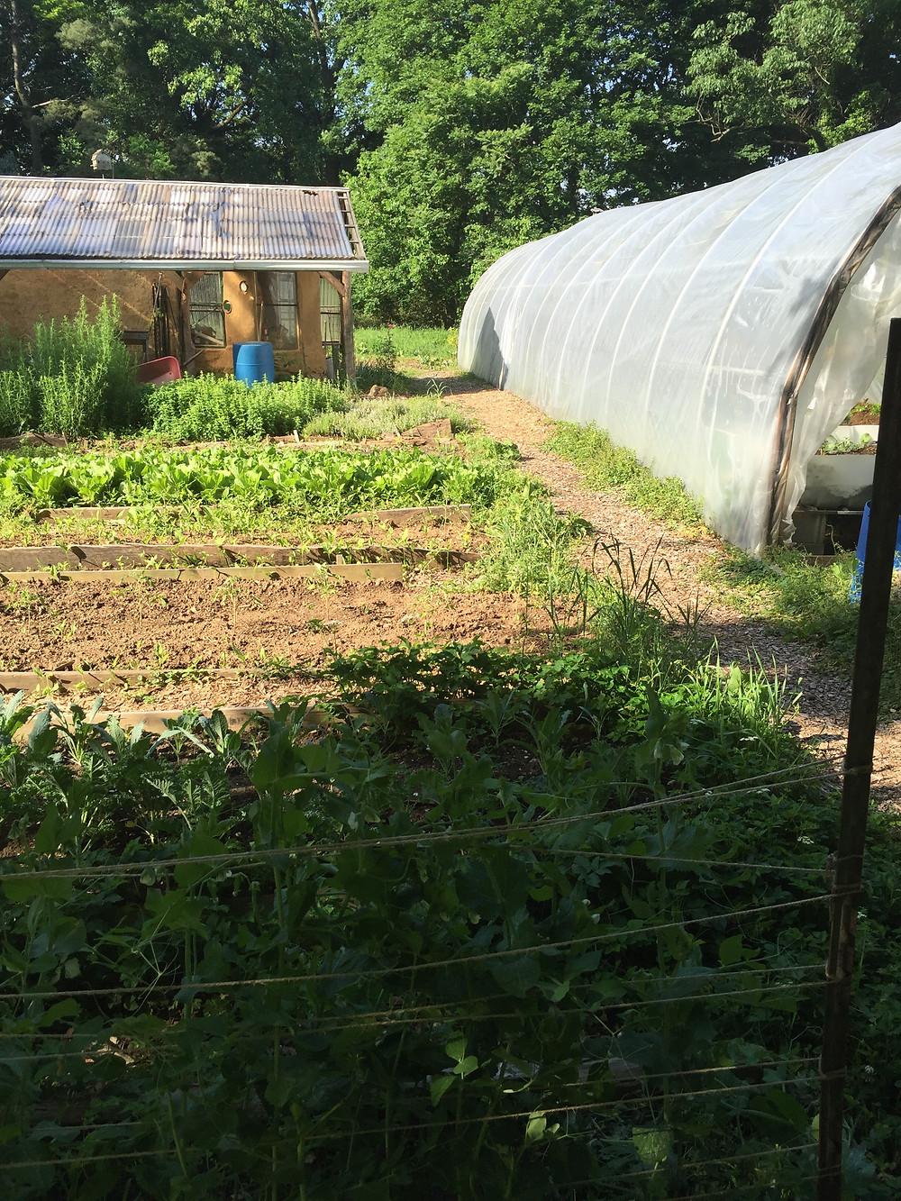 More of the garden.