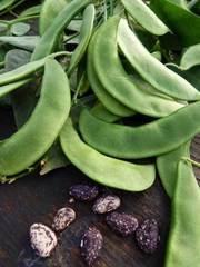Bush Beans (AKA Lima Beans)