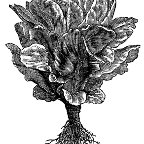 1852 Recipe for Stewed Lettuces (AKA wilted salad and croutons)