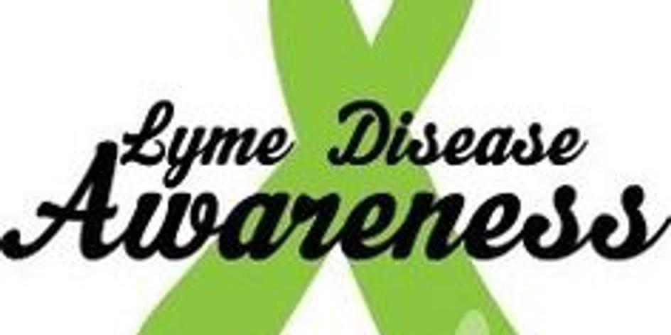 Lyme Farm Day