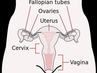 Health Class Redux: Your Lady Parts