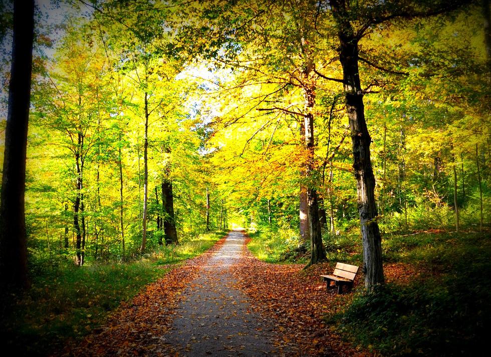 autumn-2870829_1920.jpg