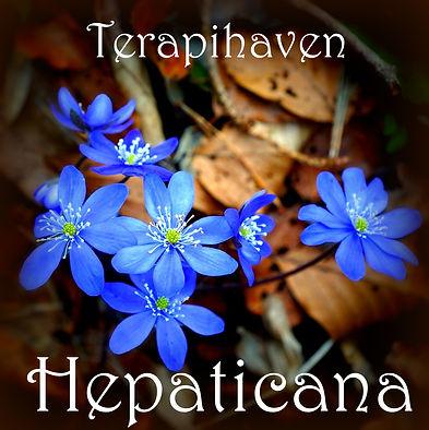 hepaticana FB.jpg