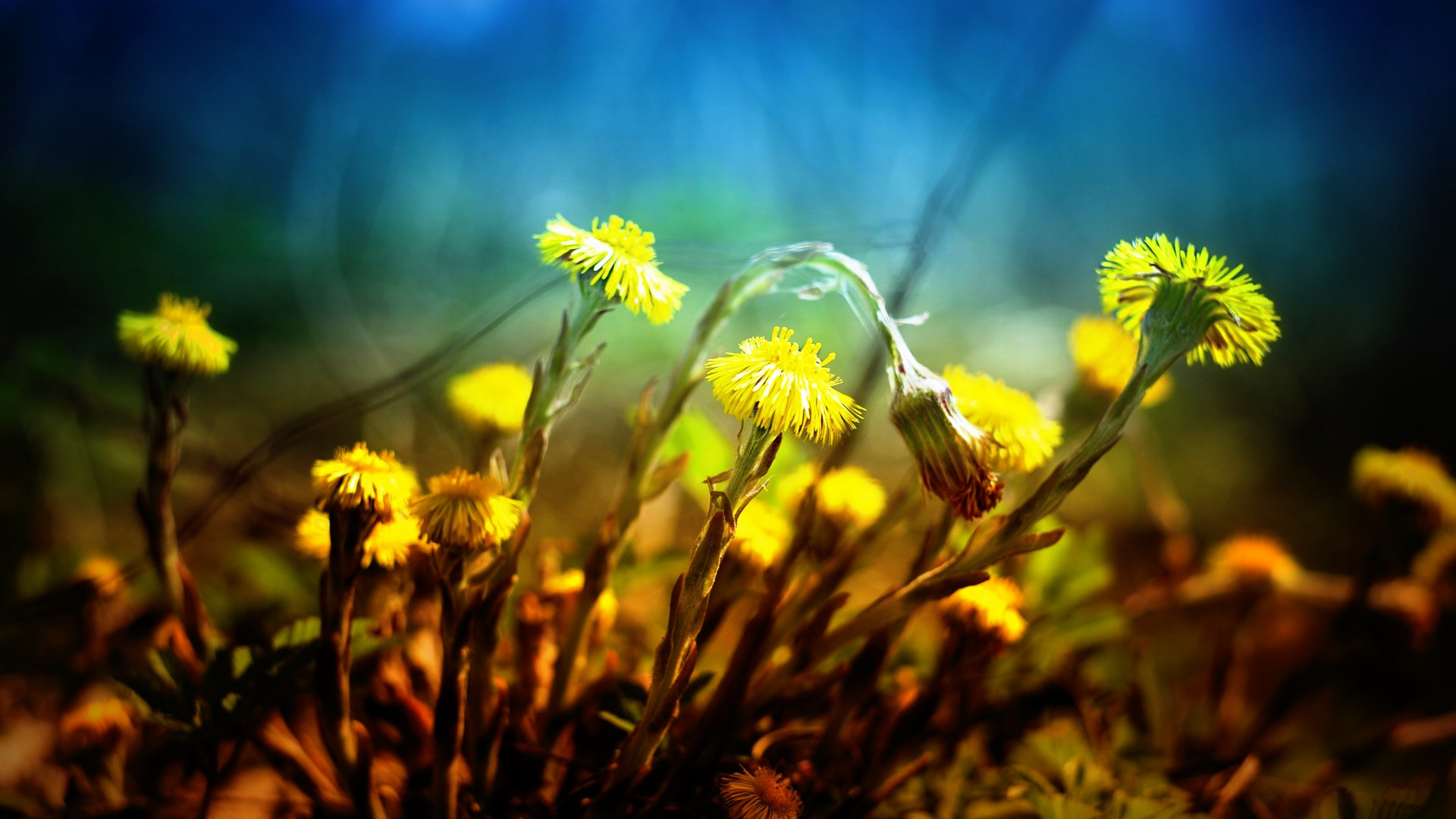 nature-3103695_1920.jpg