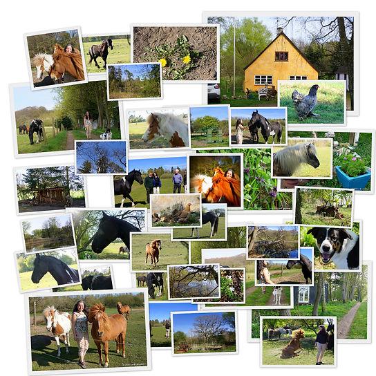 Stjernemarkerede billeder.jpg