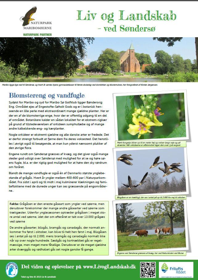 Blomstereng og vandfugle