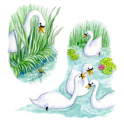 The Ugly duckling_swans_gailyerrill