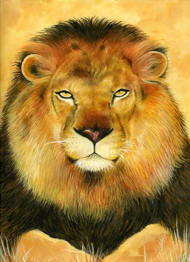 lion-watercolour-painting_gail-yerrill