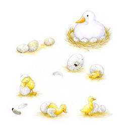 The ugly duckling_ducklings hatching_gail yerrill