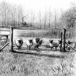 Sheep in the field_wood end_gail yerrill