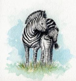 mum and baby zebra