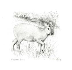 Muntjac-deer_wood-end_gail-yerrill