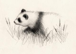 Panda sketch