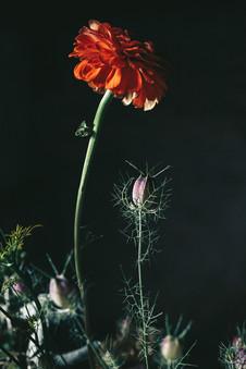 FlowerClvb-Basement-78.jpg